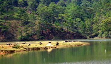 Thảo nguyên Đà Lạt đẹp và lãng mạng như phim Hàn