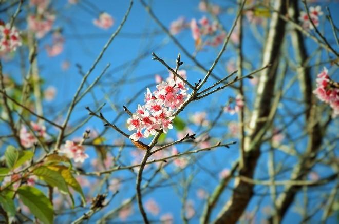 Mùa Xuân Đà Lạt