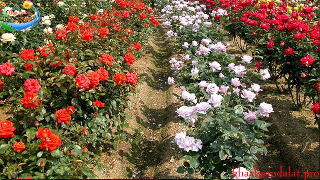 Làng hoa Vạn Thành Đà Lạt