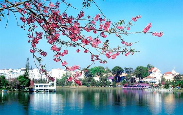 Lễ Hội hoa mai anh đào cực hấp dẫn tại đà lạt 2016