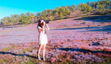 Cảnh đồng cỏ hồng giữa không gian Đà Lạt