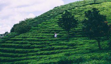 Du lịch Đà Lạt mùa lễ hội cỏ hồng chỉ tốn 3 triệu đồng
