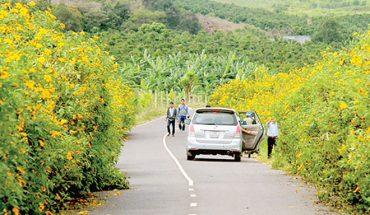 Những con đường đẹp để ngắm hoa dã quỳ Đà Lạt