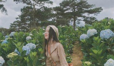 Địa chỉ 3 vườn hoa cẩm tú cầu đẹp, lớn nhất ở Đà Lạt