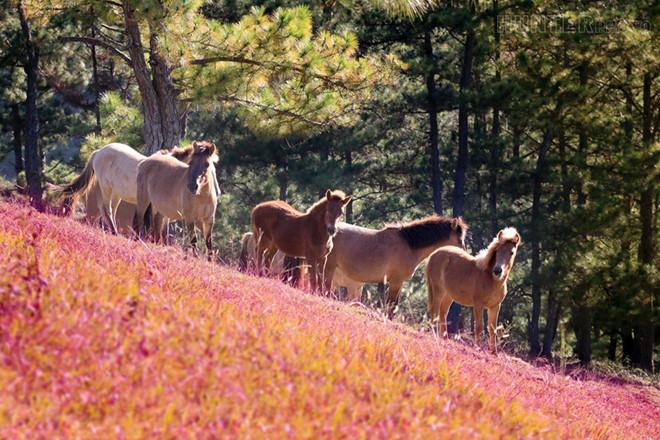 chương trình tour đồi cỏ hồng đà lạt