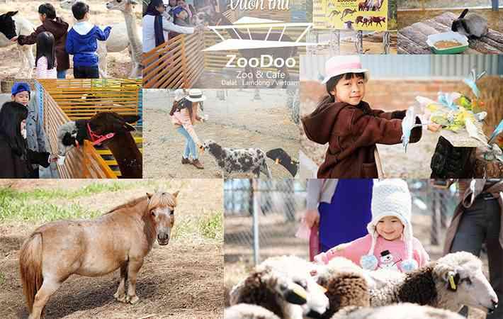 Chương trình Tour sở thú zoodoo đà lạt