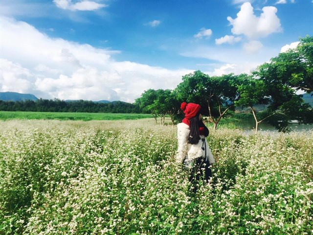 đồi cỏ hồng đà lạt 2018