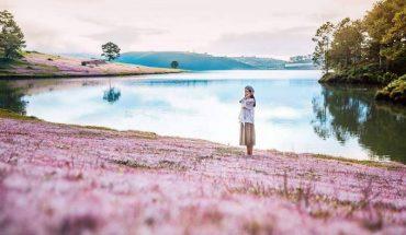 Đồi cỏ hồng Đà Lạt nở vào tháng mấy