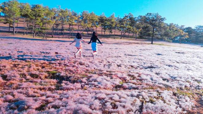 tour đồi cỏ hồng đà lạt 1 ngày