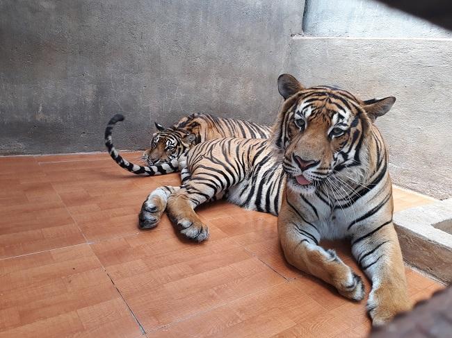 vườn thú thác prenn đà lạt