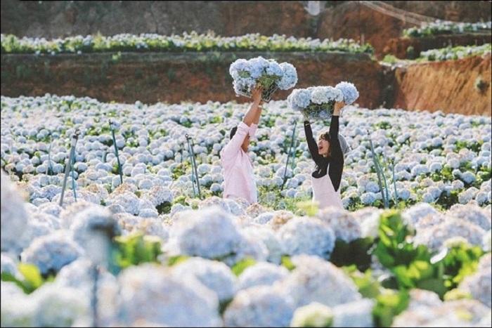 đà lạt tháng 5 có hoa gì