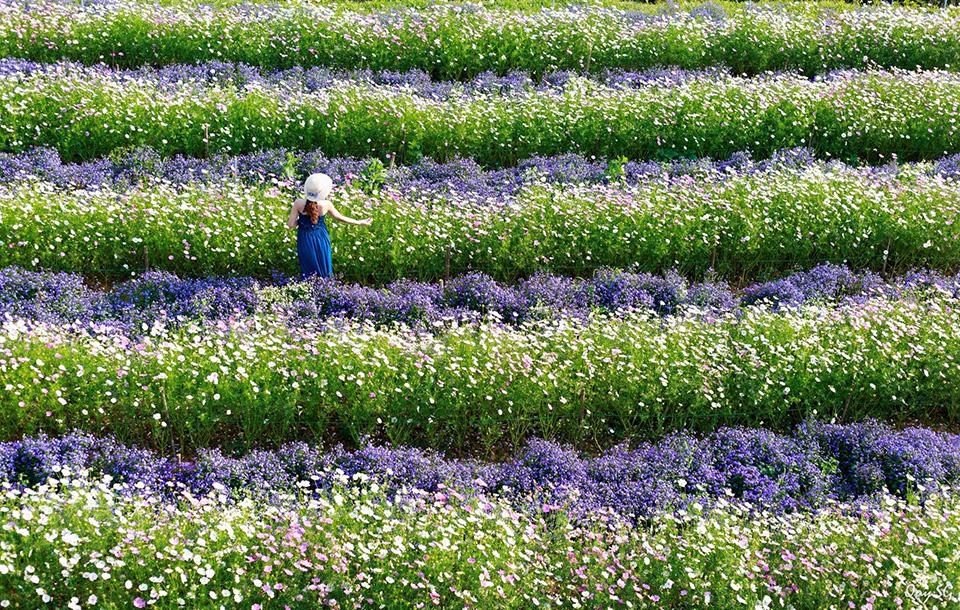 cafe cánh đồng hoa đà lạt