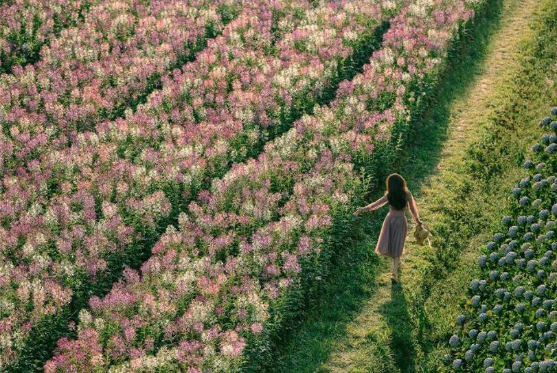 địa chỉ f cánh đồng hoa đà lạt