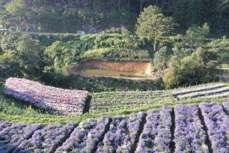 f cafe cánh đồng hoa đà lạt