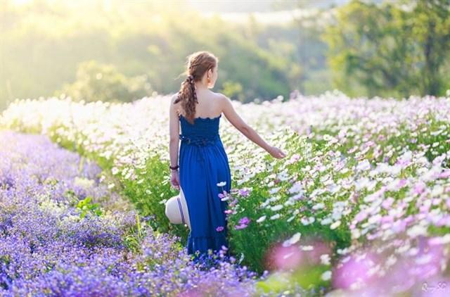 hình ảnh f cánh đồng hoa đà lạt
