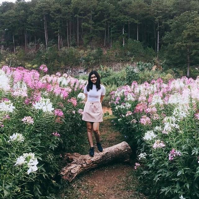 thông tin f cánh đồng hoa đà lạt