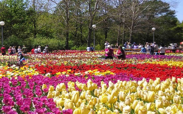 Đà Lạt nhiều loại hoa nở quanh năm