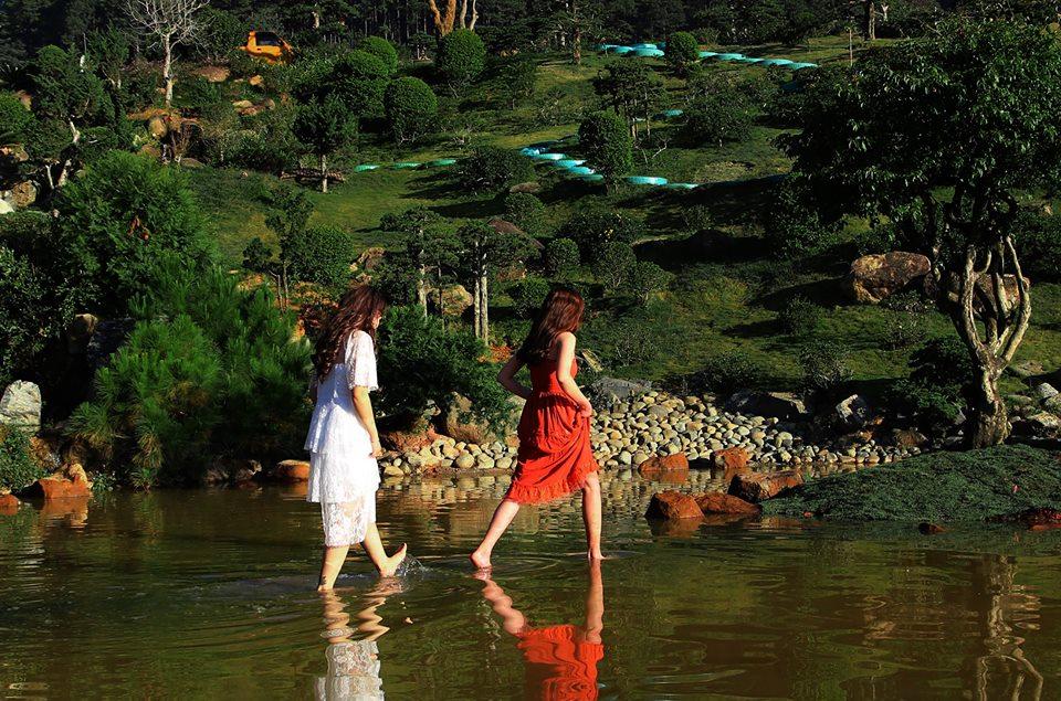 Que garden chân đèo mimosa