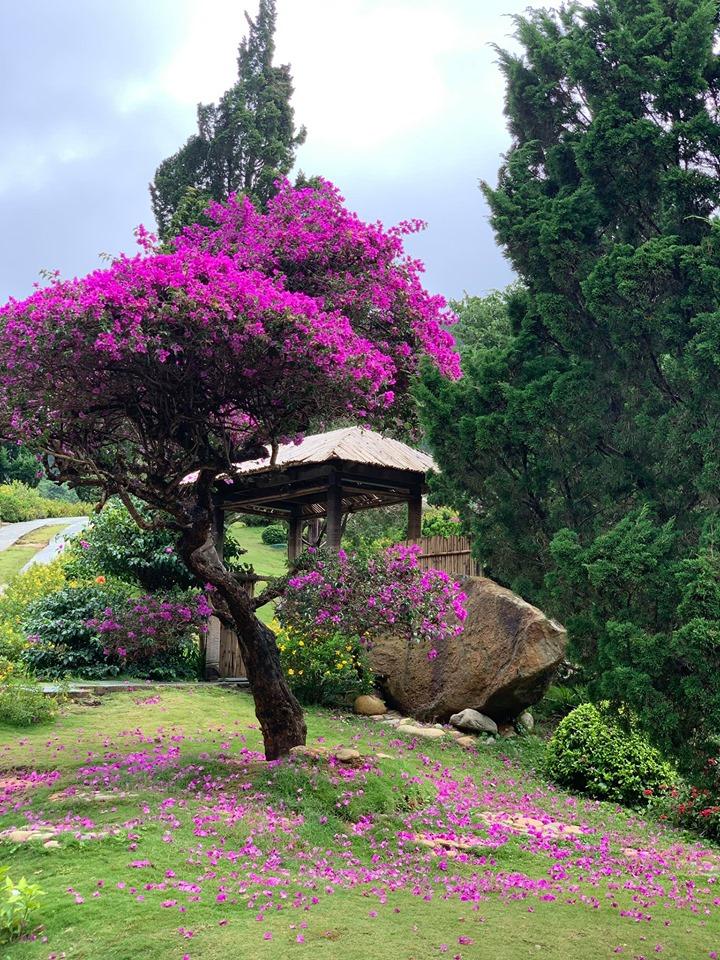 Que garden Đà Lạt có gì