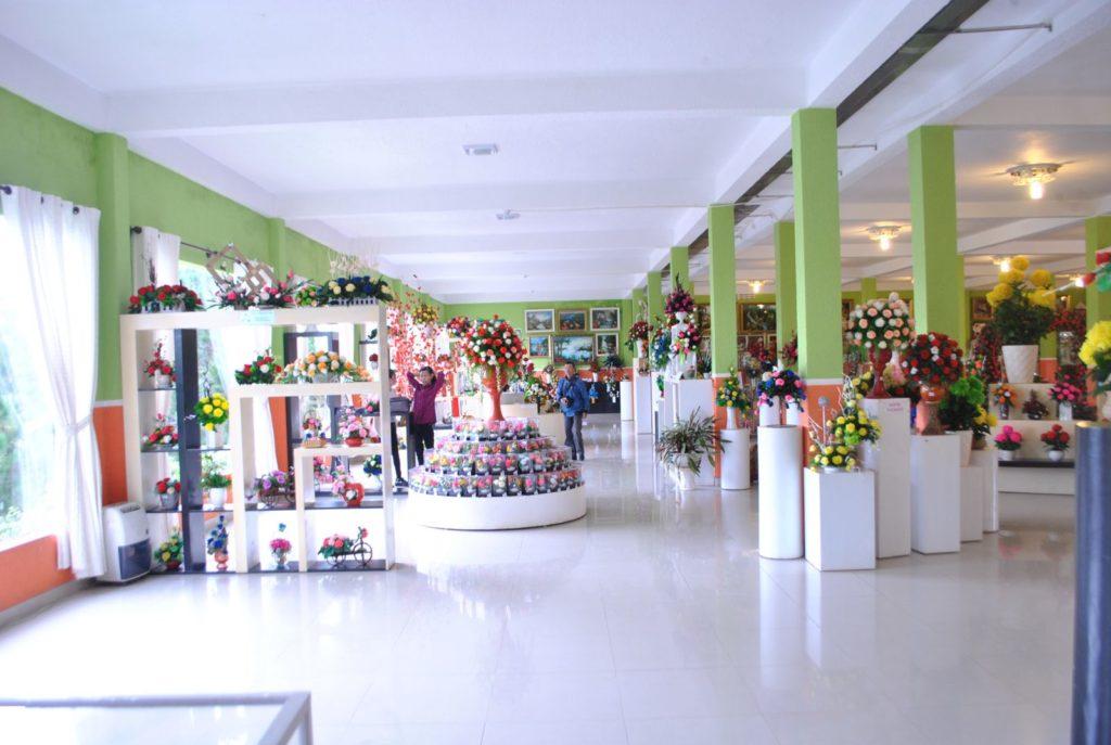 showroom kho khô - -rừng hoa khô Đà Lạt