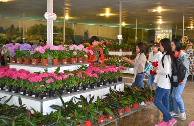 showroom rừng hoa Đà Lạt