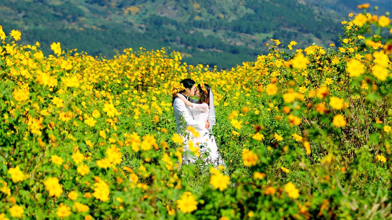 đểm chụp hình với hoa dã quỳ