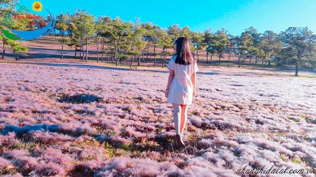 tham quan đồi cỏ hồng Đà Lạt