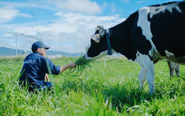 tham quan trang trại bò sữa organic Đà Lạt