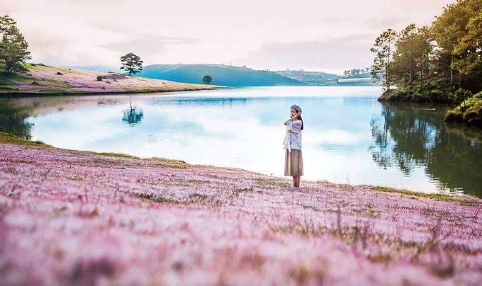 tour đồi cỏ hồng Đà Lạt