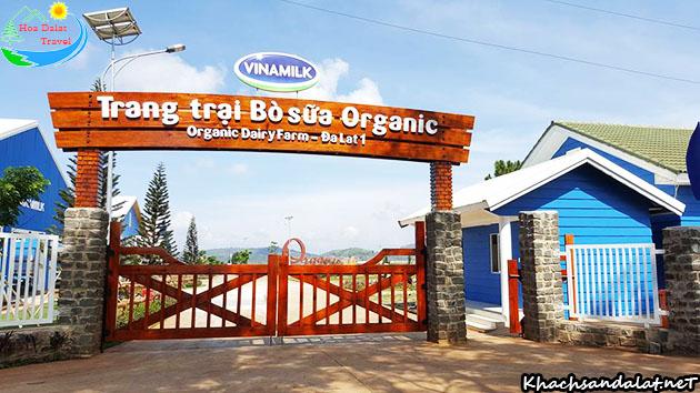 Trang trai bò sữa Organic Đà Lạt