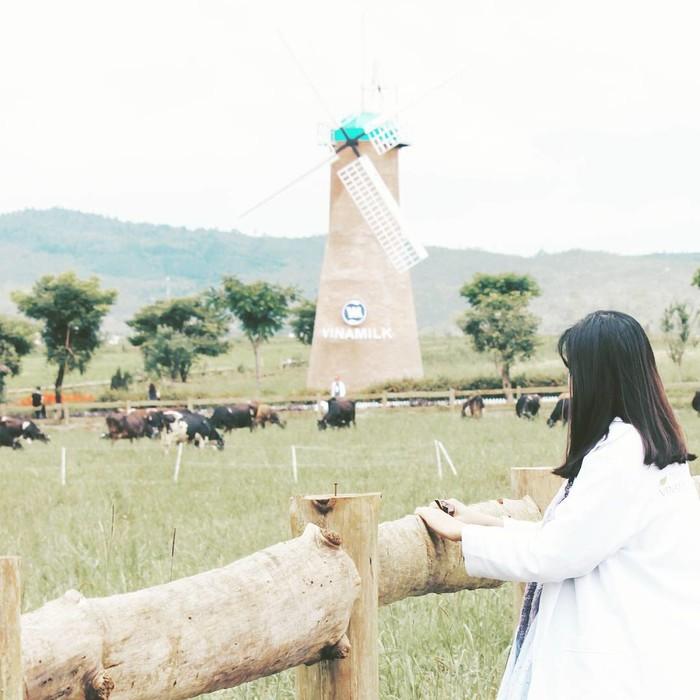 trang trại bò sữa vinamilk tại Lâm Đồng